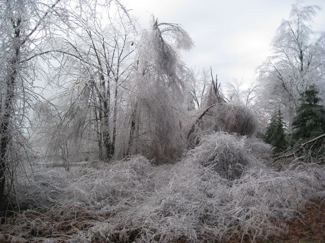 Photo of 2008 Ice Storm