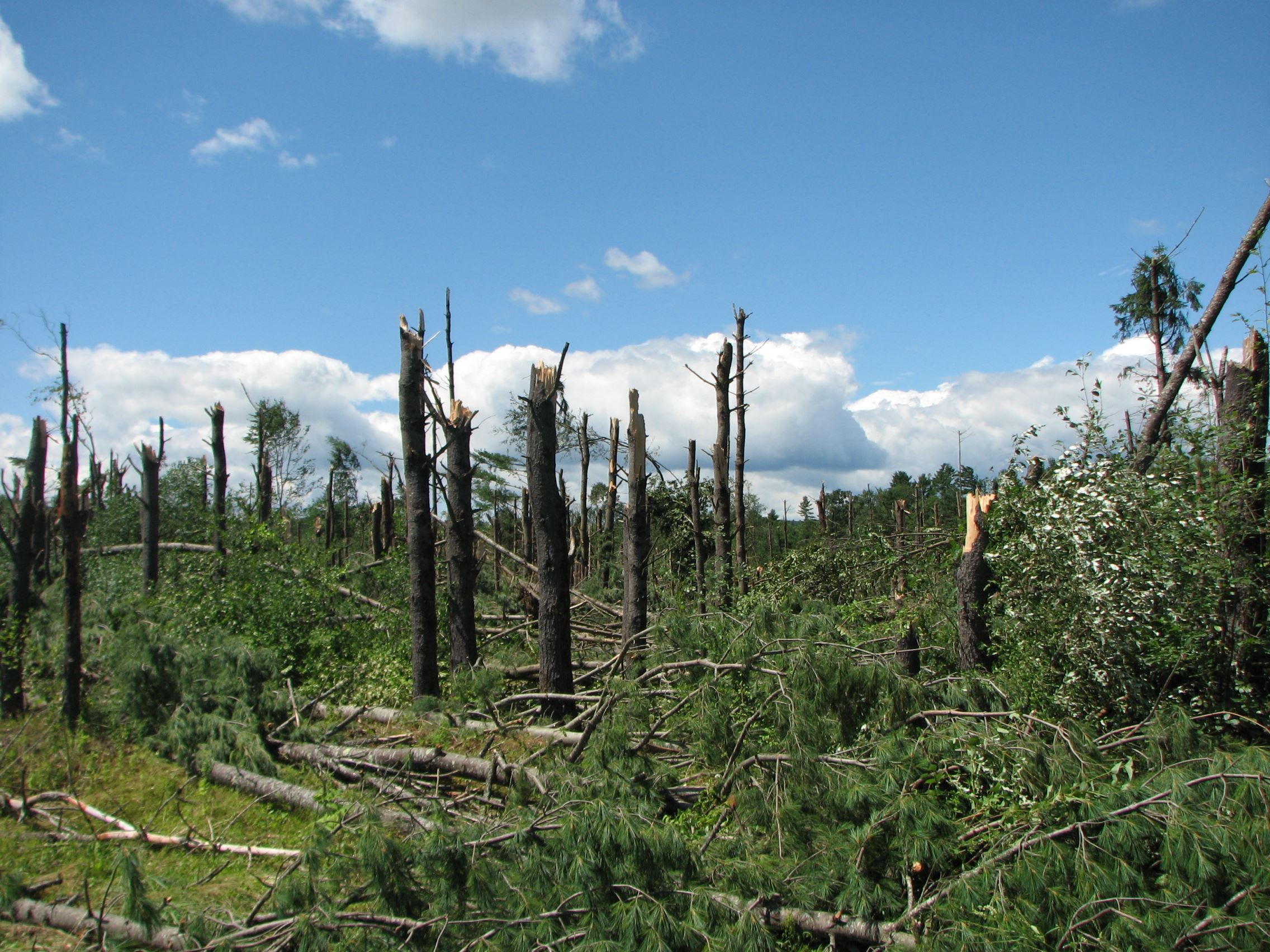 Photo of Forest after Tornado